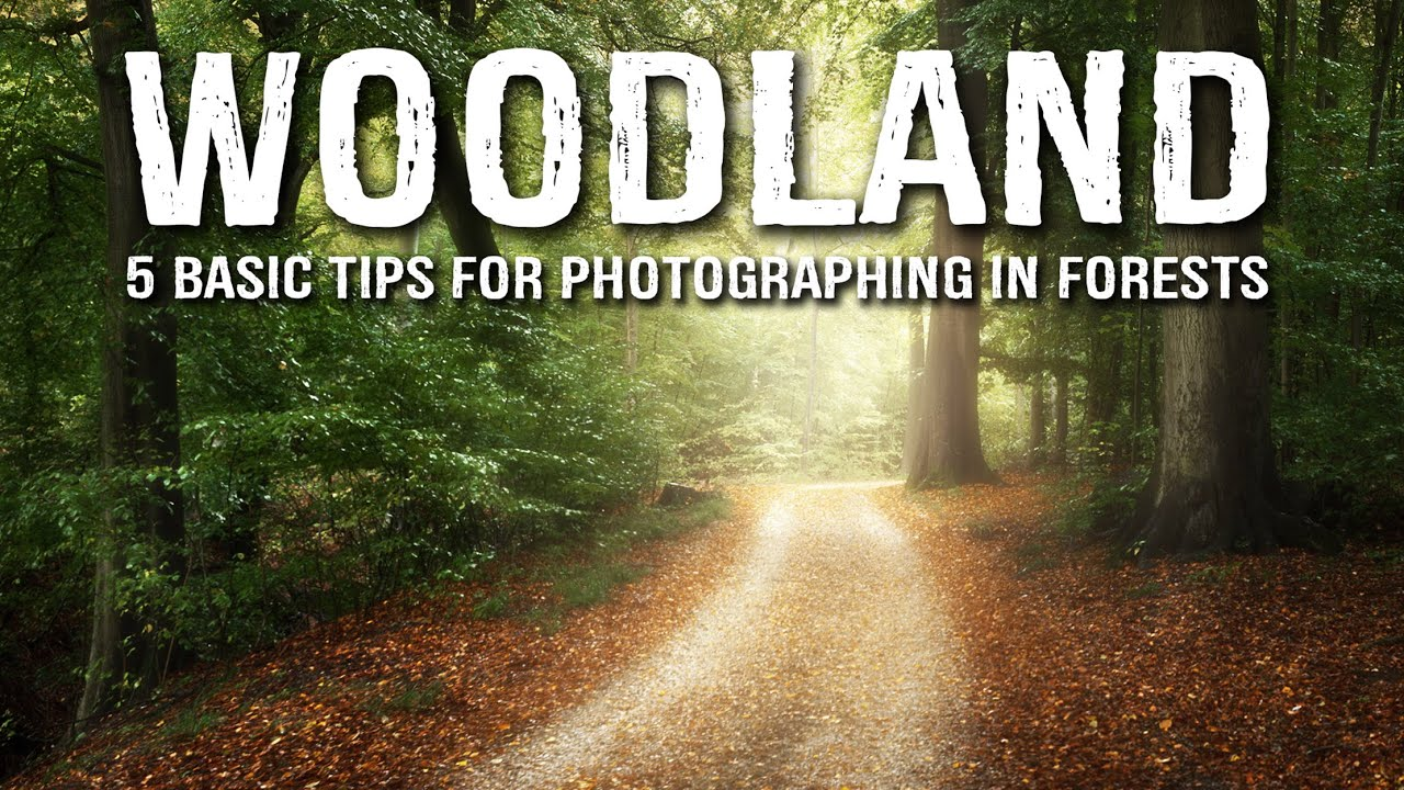 5 BASIC tips for WOODLAND photography