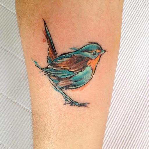 Esse turquesa e laranja songbird