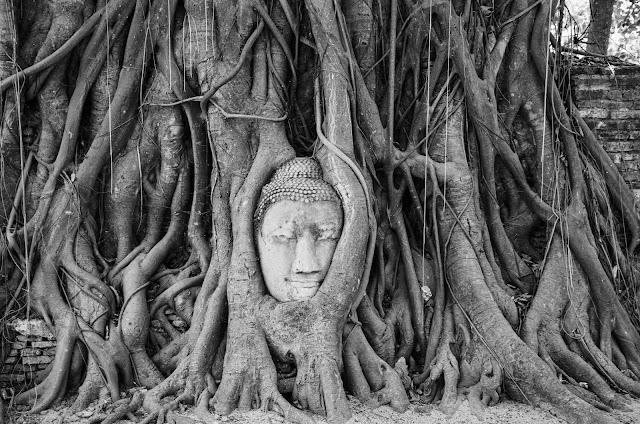 Głowa Buddy zaplątana w drzewie - Ayutthaya - Tajlandia