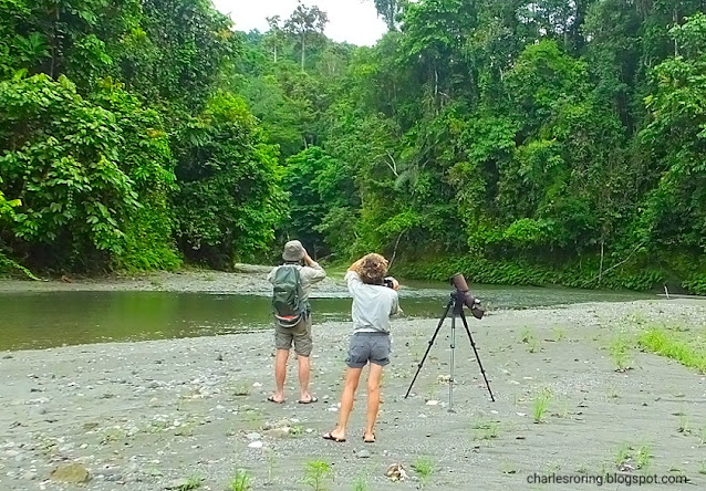 Birdwatching in lowland forest of Manokwari