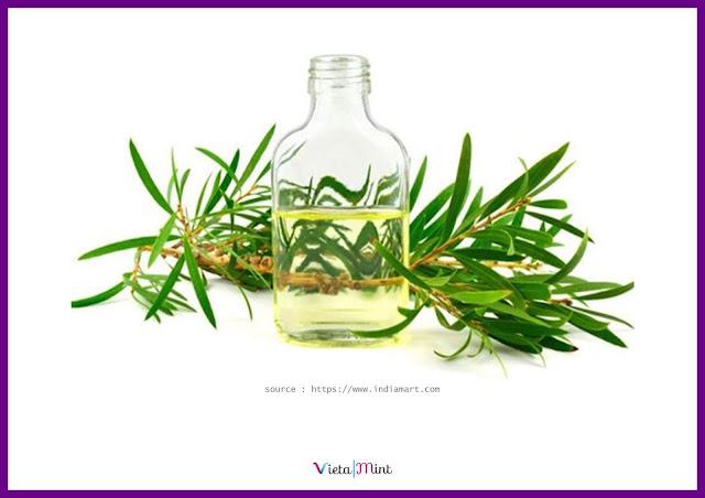 Minyak Kayu Putih Cajuput Oil