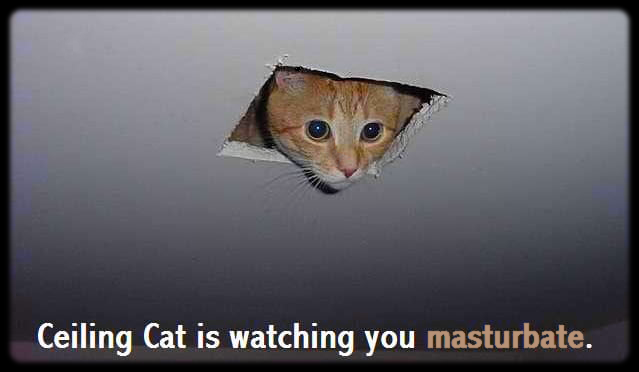 Ceiling Cat is watching you masturbate