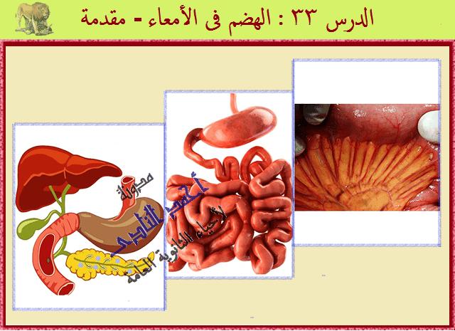 الجهاز الهضمى - الهضم فى الإنسان - الهضم فى الأمعاء - الأمعاء الدقيقة - الإثنى عشر - الصائم - اللفائفى - مدونة أحمد النادى لأحياء الثانوية العامة