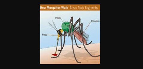 personas enfermas de Chikungunya