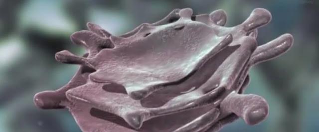 Secrecion celular y biologia