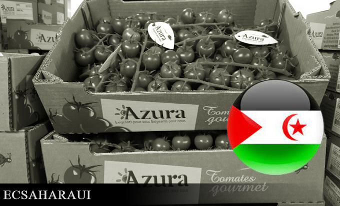 La Comisión de Comercio Internacional del Parlamento Europeo pide a la Comisión Europea investigar el fraude marroquí al exportar tomates del Sáhara Occidental con etiqueta marroquí.