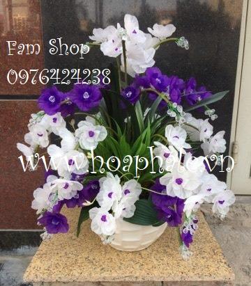 Hoa da pha le tai Cong Vi