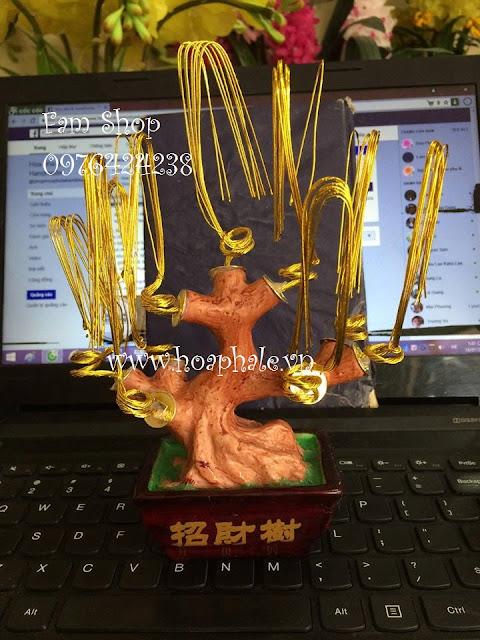 Cay hoa kim tien o Thanh Xuan