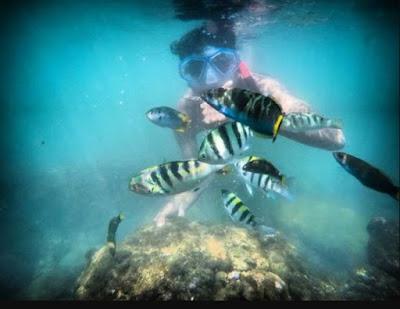 snorkling-di-pantai-slili