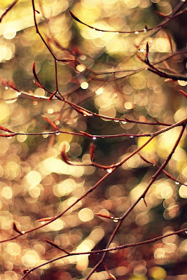 golden sunlight, branches sparkling with raindrops
