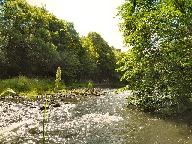 Derwenthaugh Park
