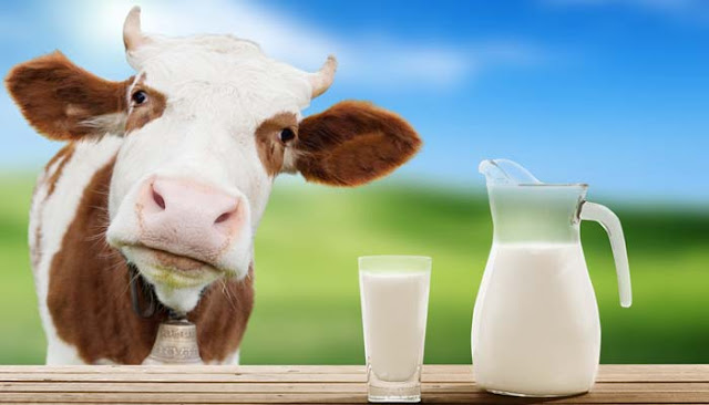 Interesting Facts And Information About Milk In Hindi