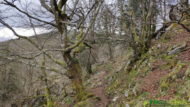 Bosque de camino al Pico Trigueiro