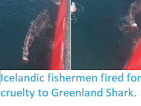 https://sciencythoughts.blogspot.com/2019/06/icelandic-fishermen-fired-for-cruelty.html