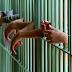 MP denuncia advogados que usaram atestados falsos para liberar presos da cadeia