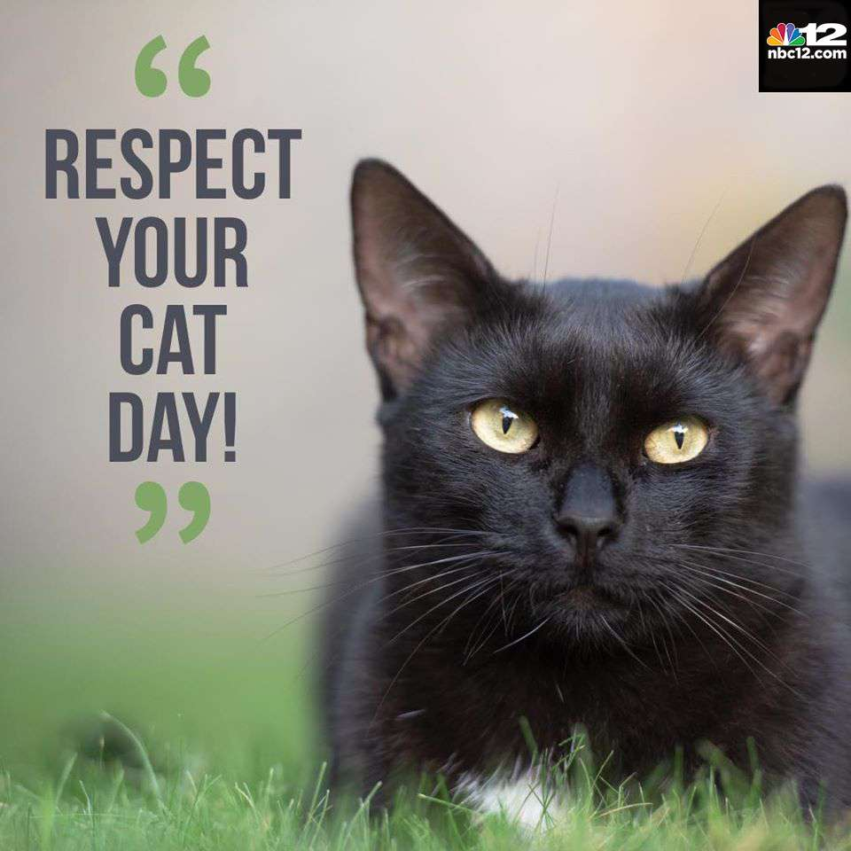 Respect Your Cat Day Wishes Awesome Images, Pictures, Photos, Wallpapers