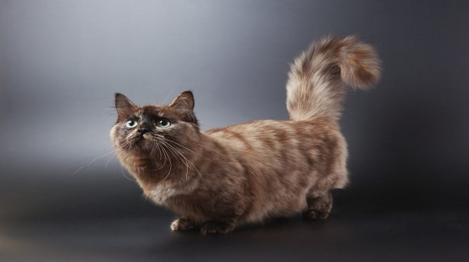 Top 10 Most Bizarre Cat Breeds in The World