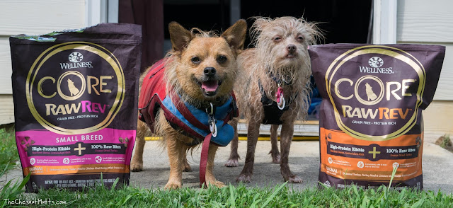 Jada and Bailey wet from swimming between their wellness dog food