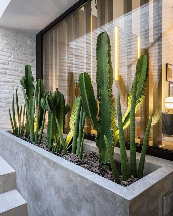 Decorar con cactus, las plantas con superpoderes_17