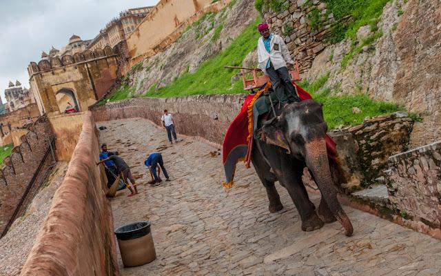 Elefante en Jaipur