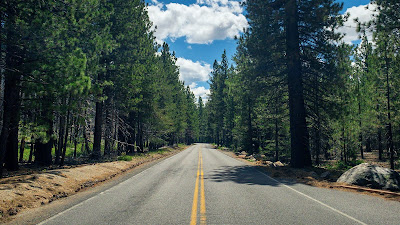 Road, Lanes, Trees, Forest, Nature