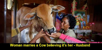 Woman marries a Cow believing it's her 'Reincarnated Husband