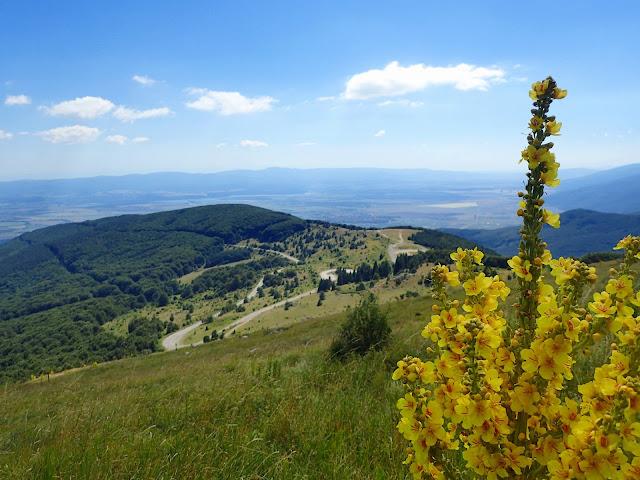 Bułgarsko-górsko-roślinnie