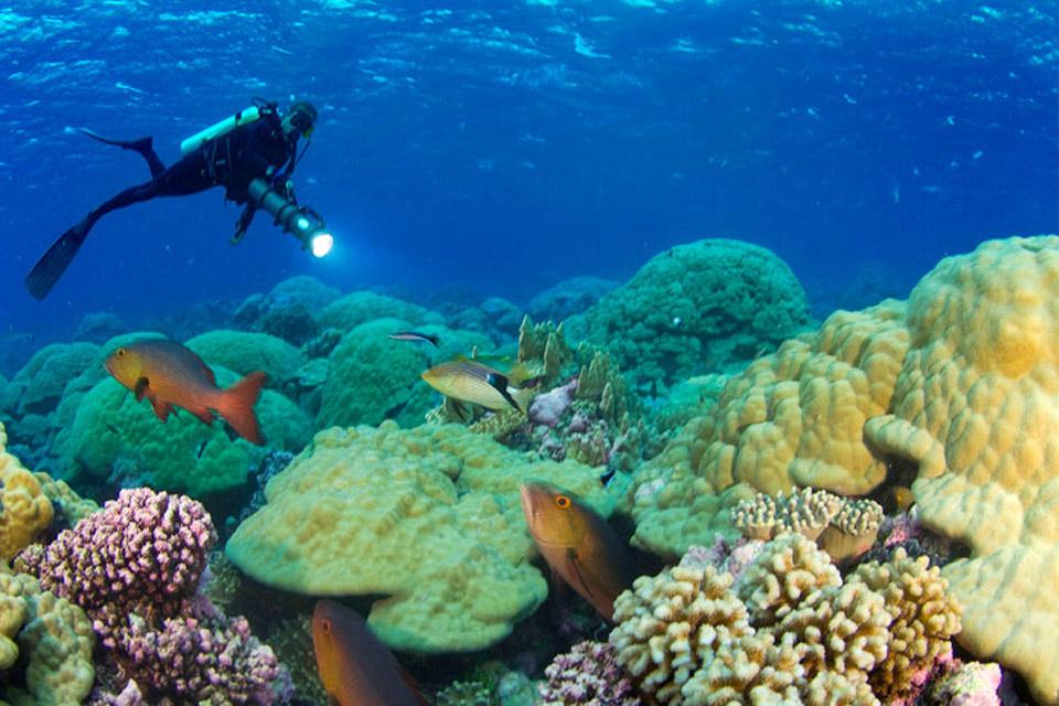 Un mundo en paz fondo del mar - Fotos fondo del mar ...
