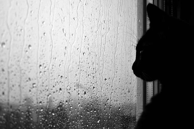 Mèo có thể chết vì mưa không?