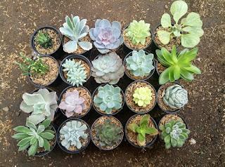 paket-kaktus-dan-sukulen.jpg