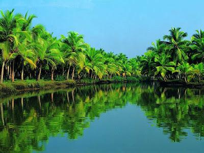 Coconut garden in Ben Tre Province