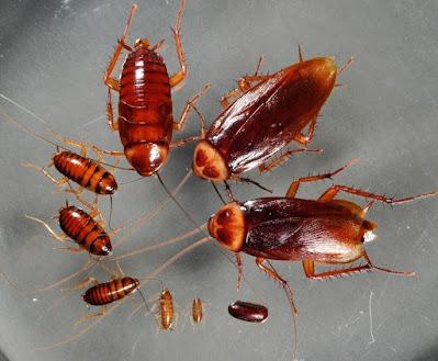 plagas en hogares desinfección plagas certificación oficial [desratización] desinfecciones en empresas habilitacion de negocios