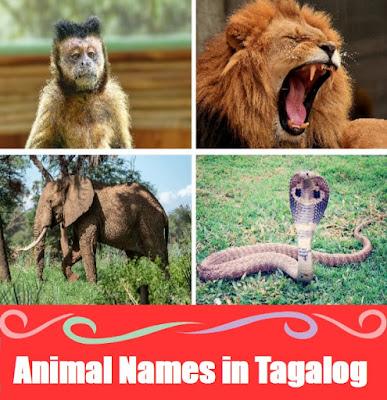 Zoo Animal Names : Word List in Tagalog