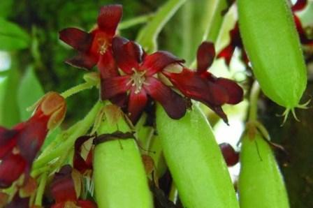 Sebab tak sedikit orang yang sadar bahwasanya buah yang juga tergolong dalam jenis sayur ini 6 Manfaat Belimbing Wuluh Untuk Wajah