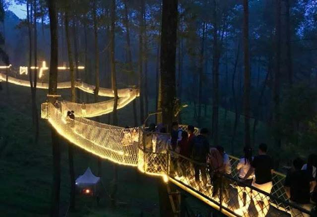 Ponte Orchid Forest Cikole