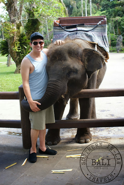 Elephant Safari Park Taro Bali Review - Feeding an elephant