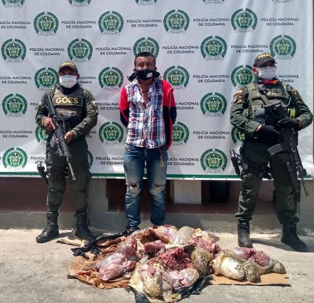 hoyennoticia.com, Le incautaron 58 kilos de carne de tortuga