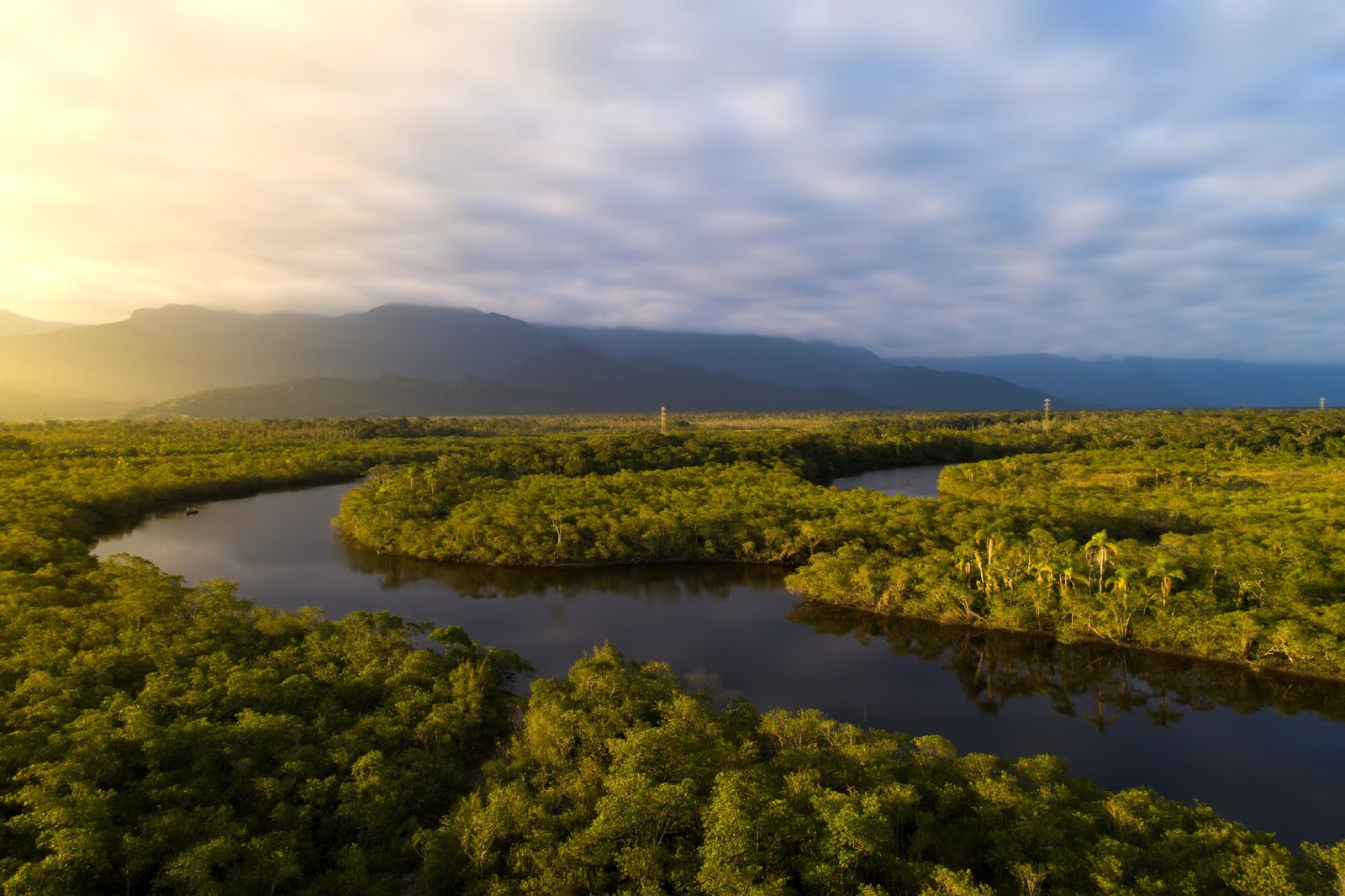 Vegan Blockchain Company Bought 15,000 Acres Of Amazon Rainforest For Preservation