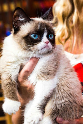 Snowshoe Cat breed facts