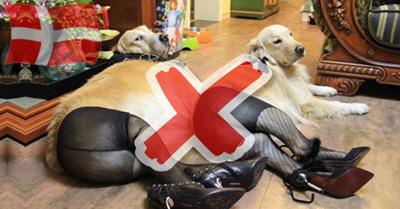 Δανία 2015 - Απαγόρευση της... Κτηνοβασίας