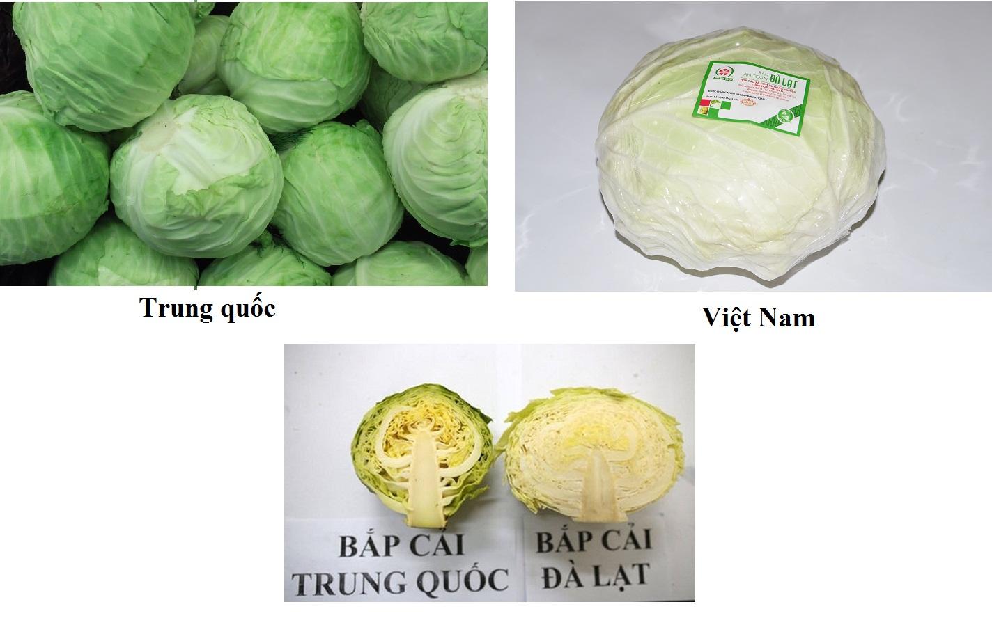 Cách phân biệt Bắp cải Trung quốc
