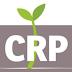 مطلوب معلمي ومعلمات لغة انجليزية متطوعين للعمل في مشروع اصلاح الضمان الذي يعنى بمساعدة اللاجئين - CRP