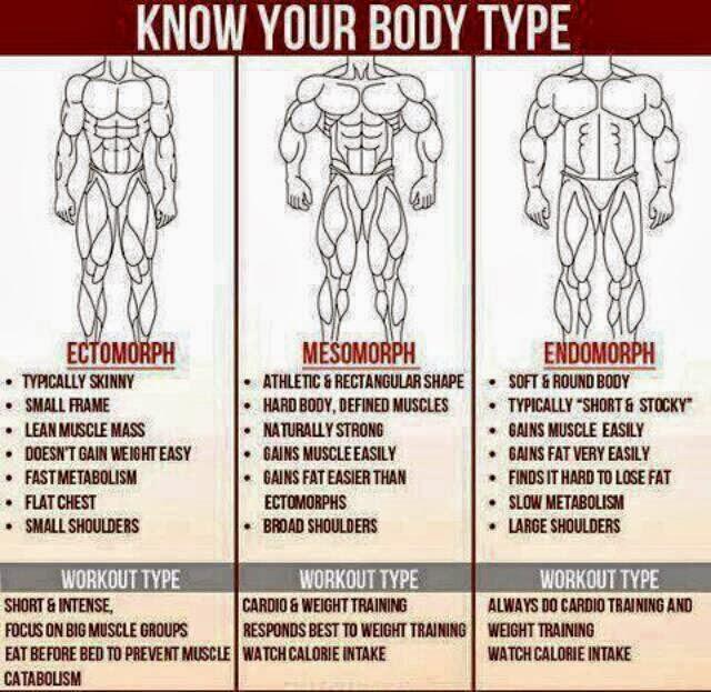 What is your body type Ectomorph, Endomorph or Mesomorph