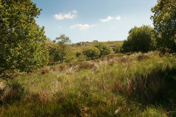 Emsworthy Mire nature reserve. Photo copyright Simon Williams (All rights reserved)