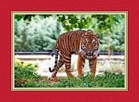 Tiger Islamic Dream Meaning and Interpretations – DREAMLAND