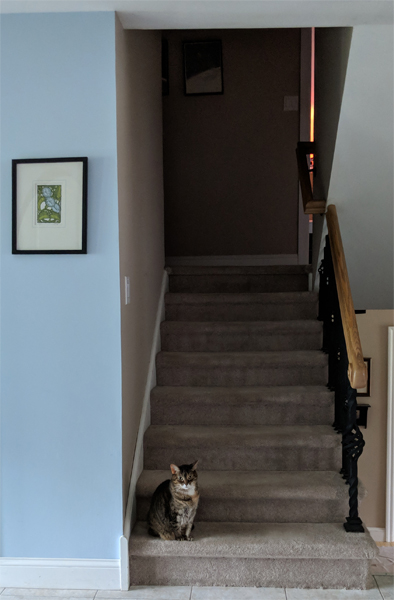 image of Sophie the Torbie Cat sitting at the bottom of the stairs