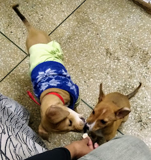 The heartwarming rescue stories of my boys