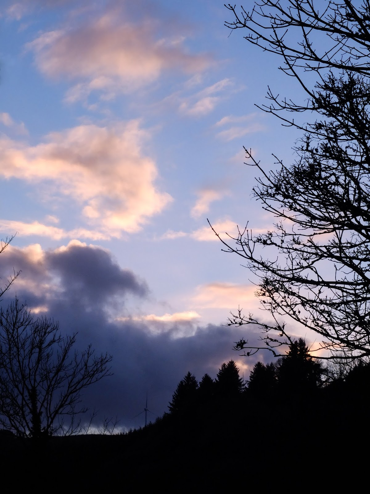 Blue sunset sky with bare tree branches in a valley in North Cork.