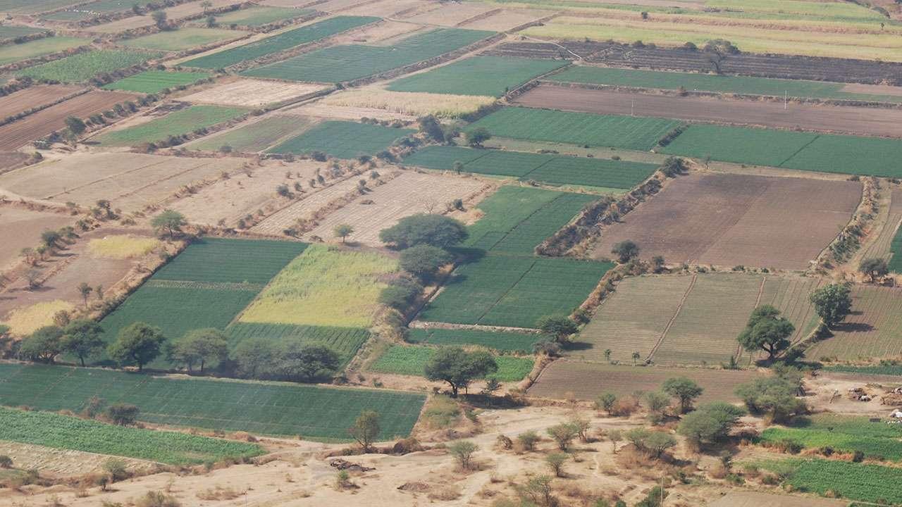 किल्ल्यावरून दिसणारी शेती