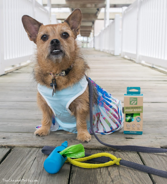 Mini Review: Only Natural Pet Eco-Friendly Poop Bags and Dispenser
